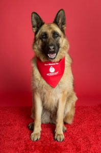 Canine Donor Programme for Pet Blood Bank